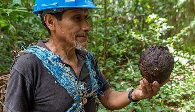 Brazīlijas riekstu eļļa no Peru